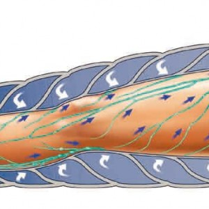 Reducerile lunii aprilie la tratamente masaj limfatic